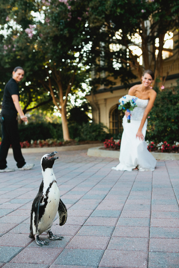 laura andrew 39 s baltimore zoo wedding in maryland
