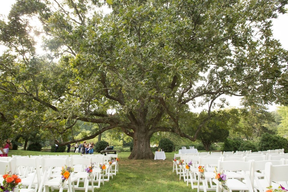 Outdoor wedding decorations for trees for Decorating outdoor trees