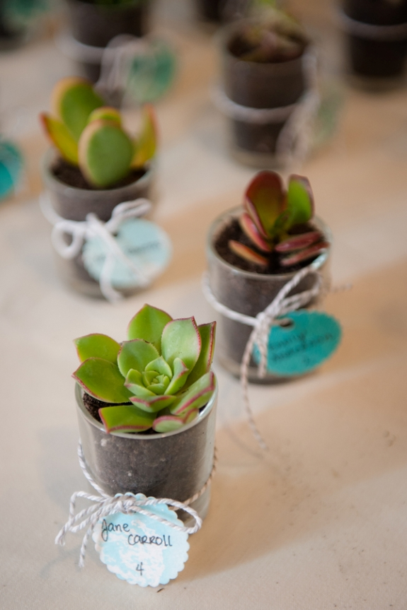 unique creative succulent escort cards